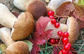 Mushrooms and wild berries in the meadow.